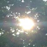 『自己一致が自分らしさの源』そしてまた『美しき緑の星』
